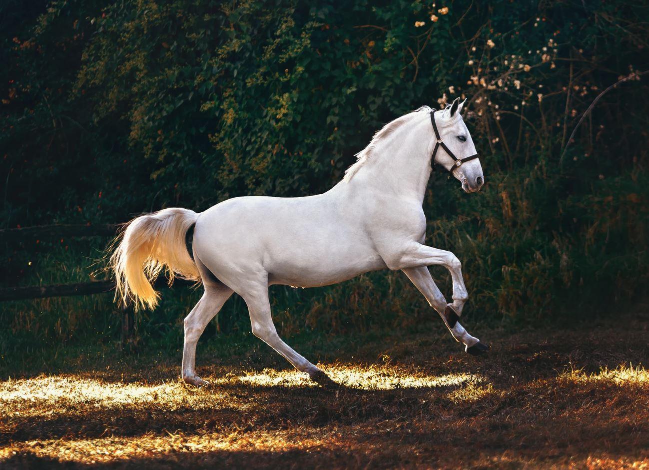 "A horse, a horse, my kingdom for a horse!"" by Tim Faith - Debbie Wilson"