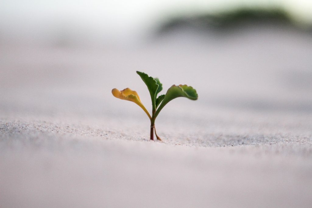 A close up photo shows a new plant sprouting from the ground.