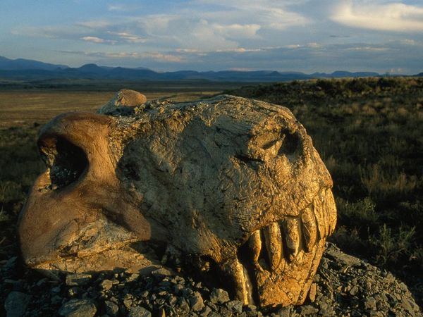 The Permian Extinction—When Life Nearly Came to an End
