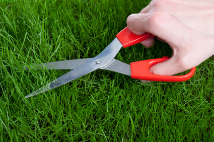 Lawn-cut-with-scissors