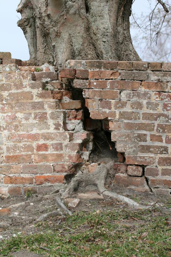 brick_wall_roots